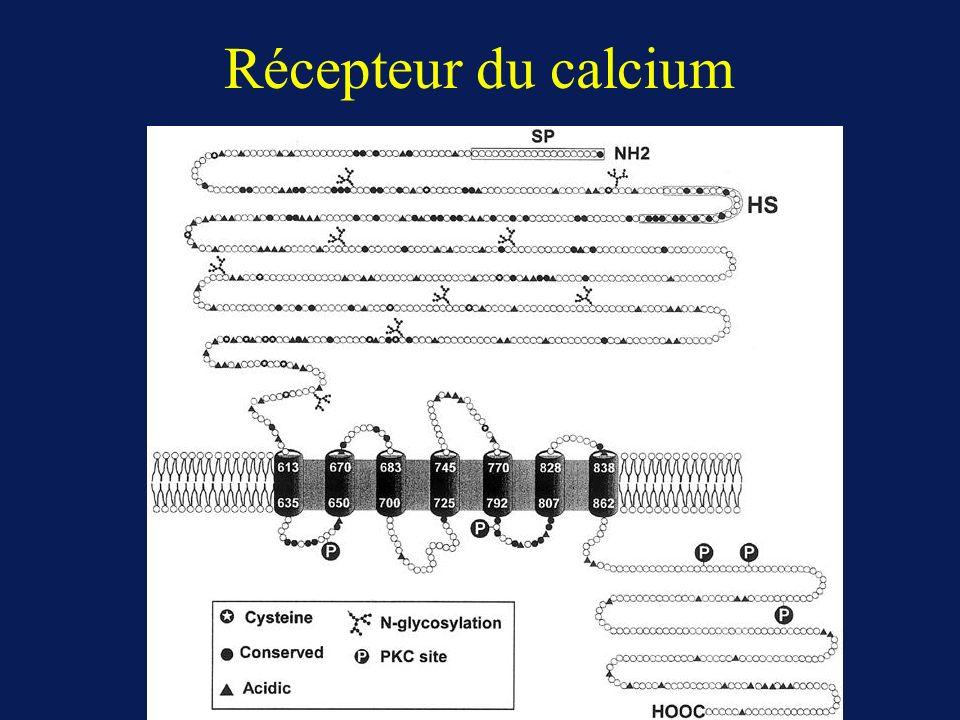 Récepteur du calcium
