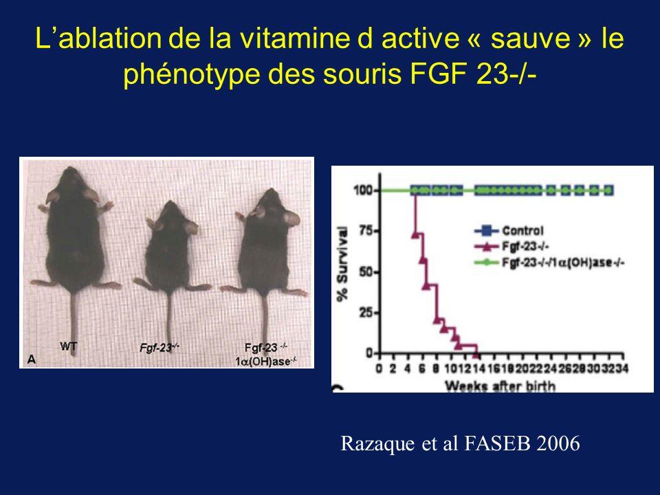 L'ablation de la vitamine d active « sauve » le phénotype des souris FGF 23-/-