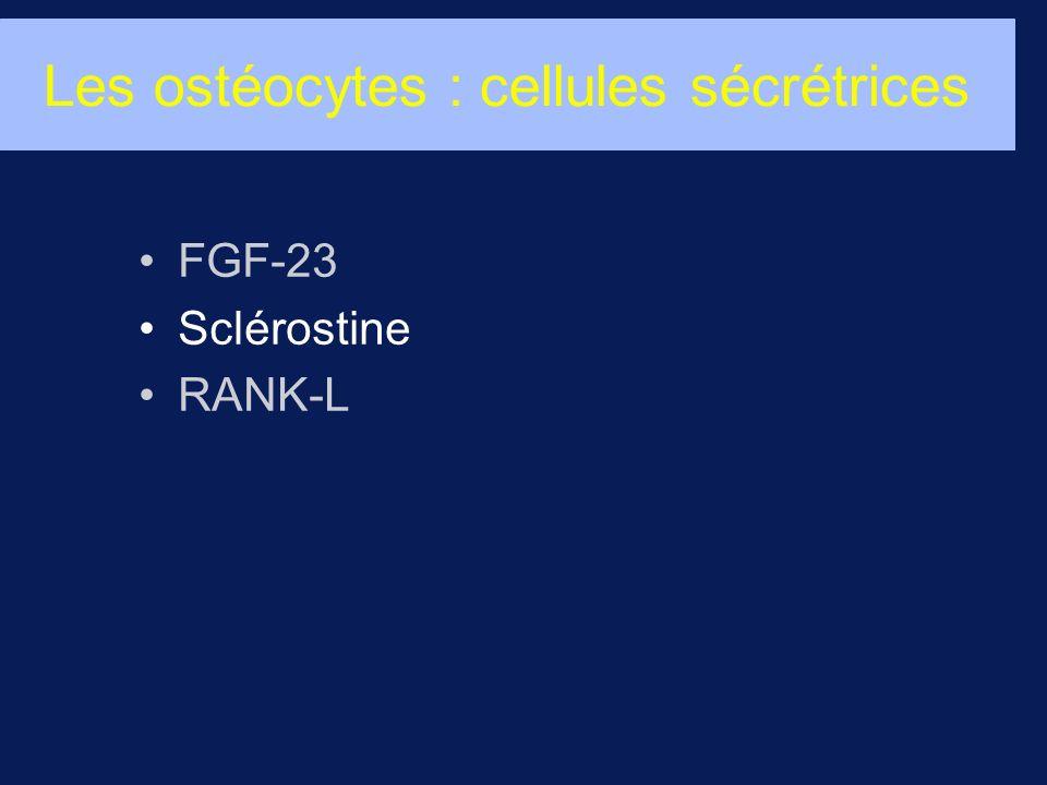 Les ostéocytes : cellules sécrétrices