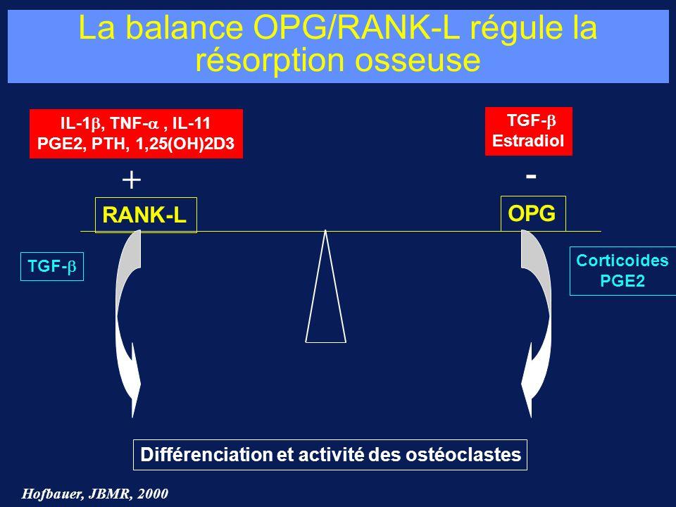 La balance OPG/RANK-L régule la résorption osseuse