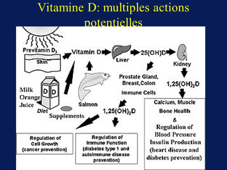 Vitamine D: multiples actions potentielles