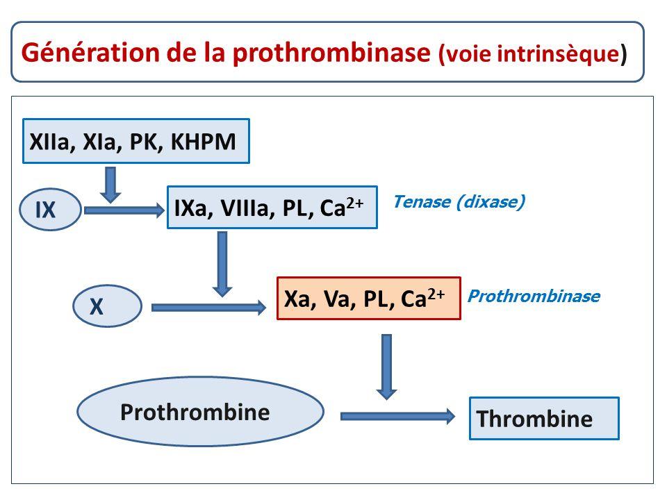 Génération de la prothrombinase (voie intrinsèque)