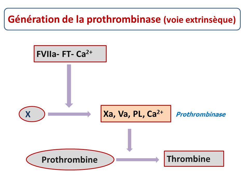 Génération de la prothrombinase (voie extrinsèque)