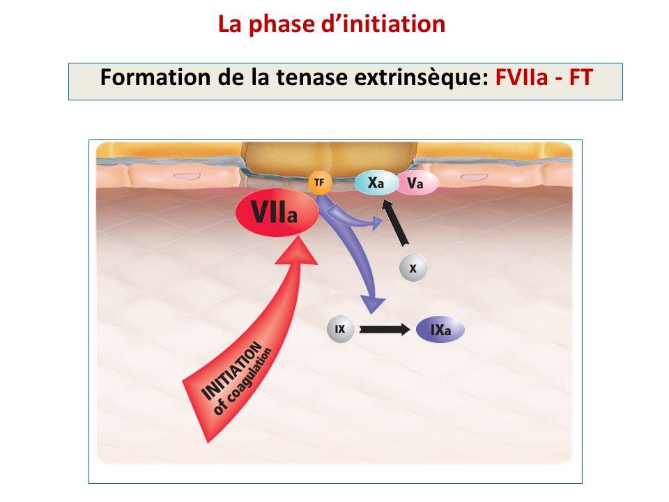 La phase d'initiation Formation de la tenase extrinsèque: FVIIa - FT