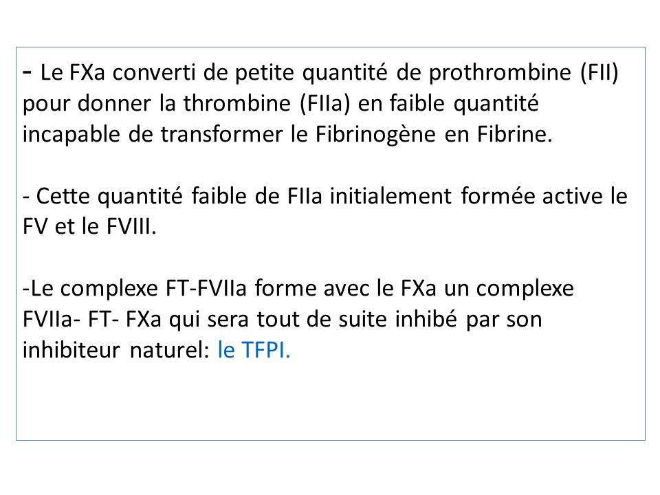 Le FXa converti de petite quantité de prothrombine (FII) pour donner la thrombine (FIIa) en faible quantité incapable de transformer le Fibrinogène en Fibrine.