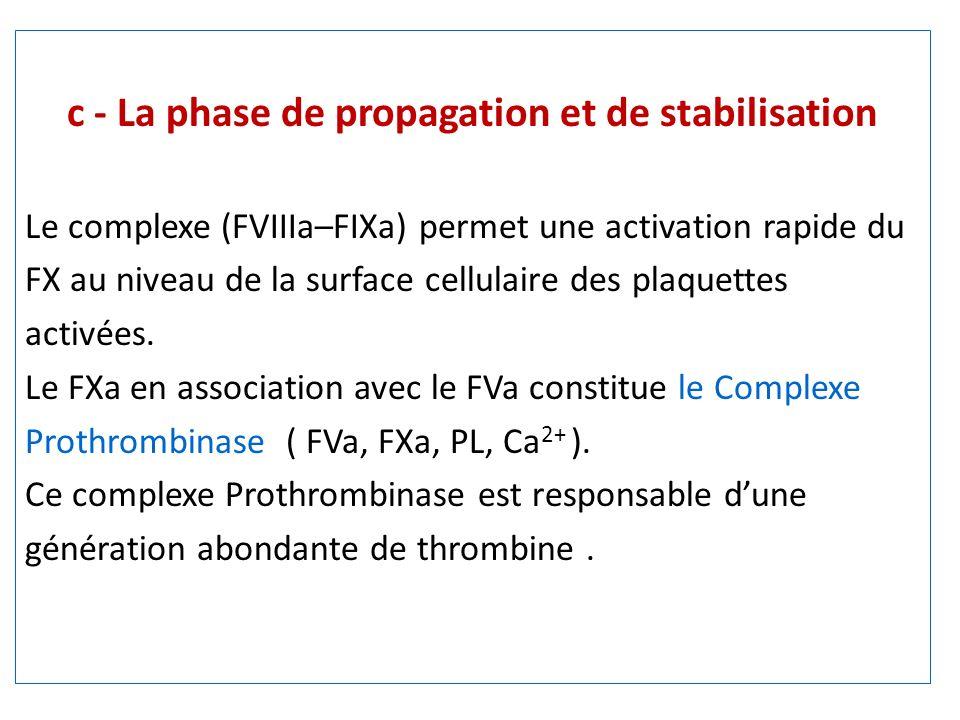 c - La phase de propagation et de stabilisation