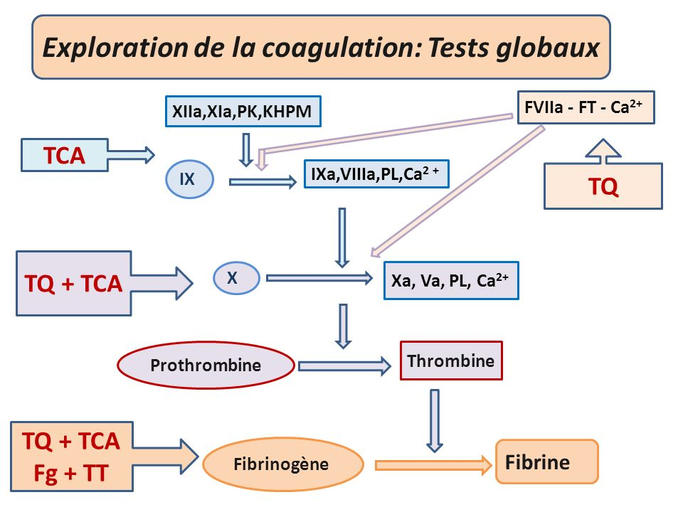 Exploration de la coagulation: Tests globaux