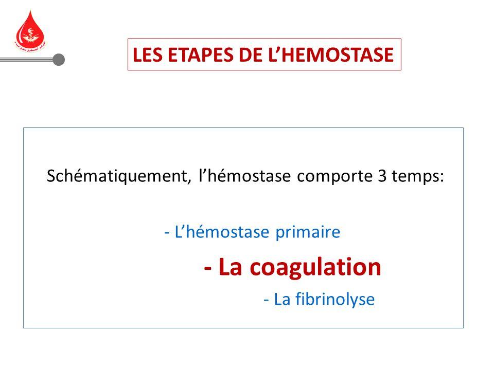 LES ETAPES DE L'HEMOSTASE