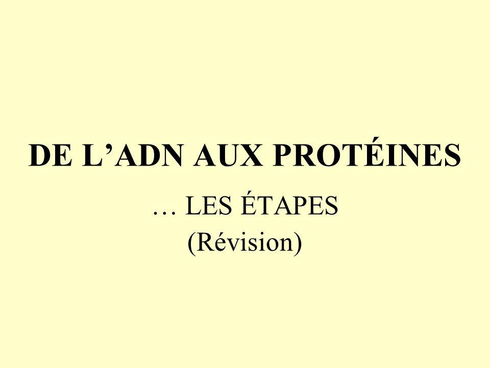 … LES ÉTAPES (Révision)
