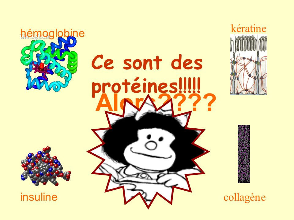 Alors Ce sont des protéines!!!!! kératine hémoglobine collagène
