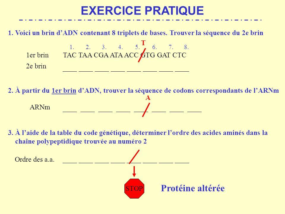 EXERCICE PRATIQUE Protéine altérée