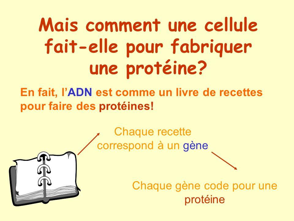 Mais comment une cellule fait-elle pour fabriquer une protéine