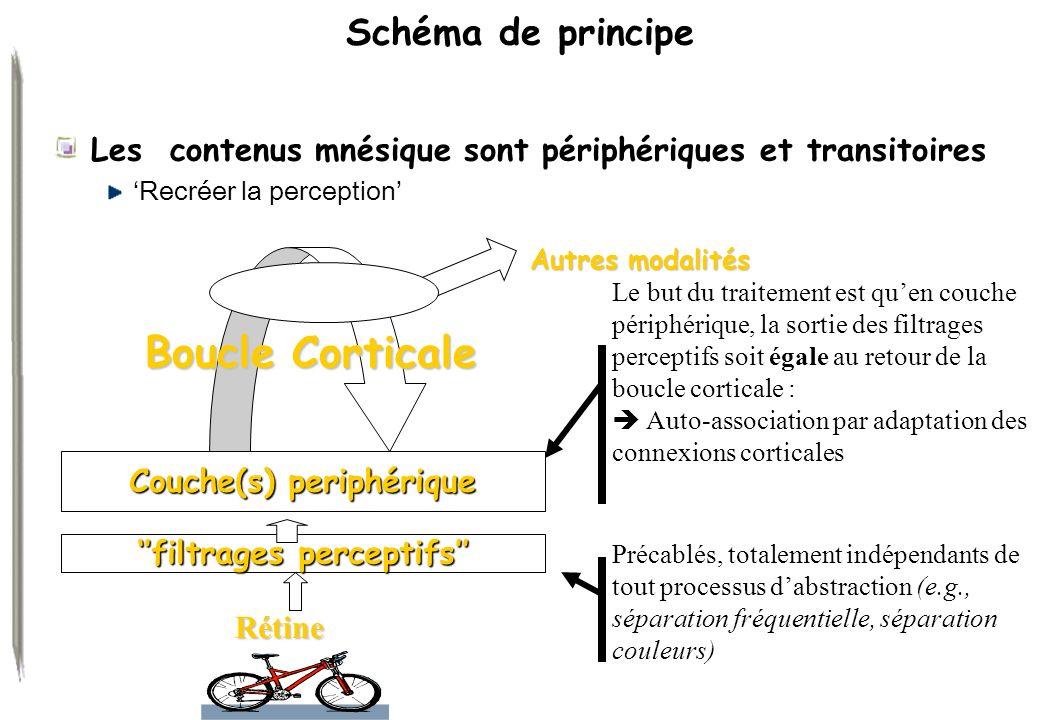 ''filtrages perceptifs'' Couche(s) periphérique