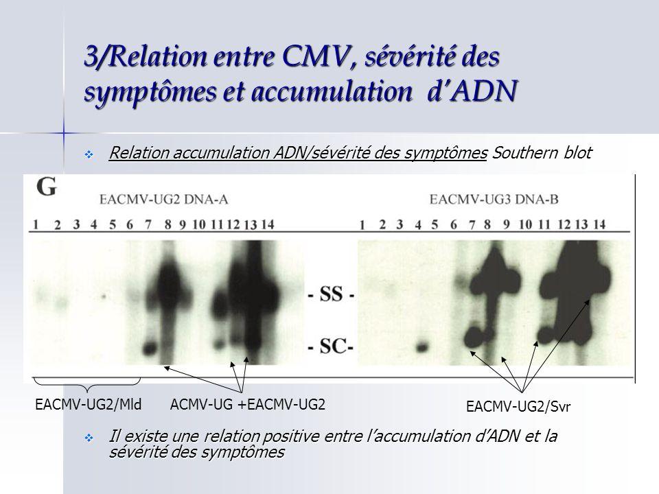 3/Relation entre CMV, sévérité des symptômes et accumulation d'ADN