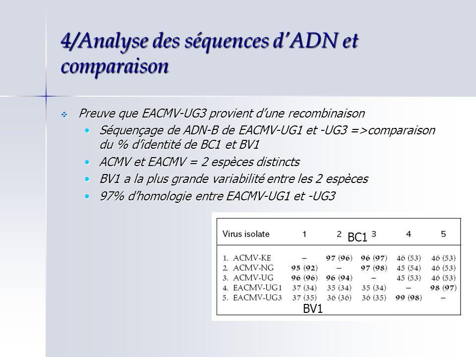 4/Analyse des séquences d'ADN et comparaison