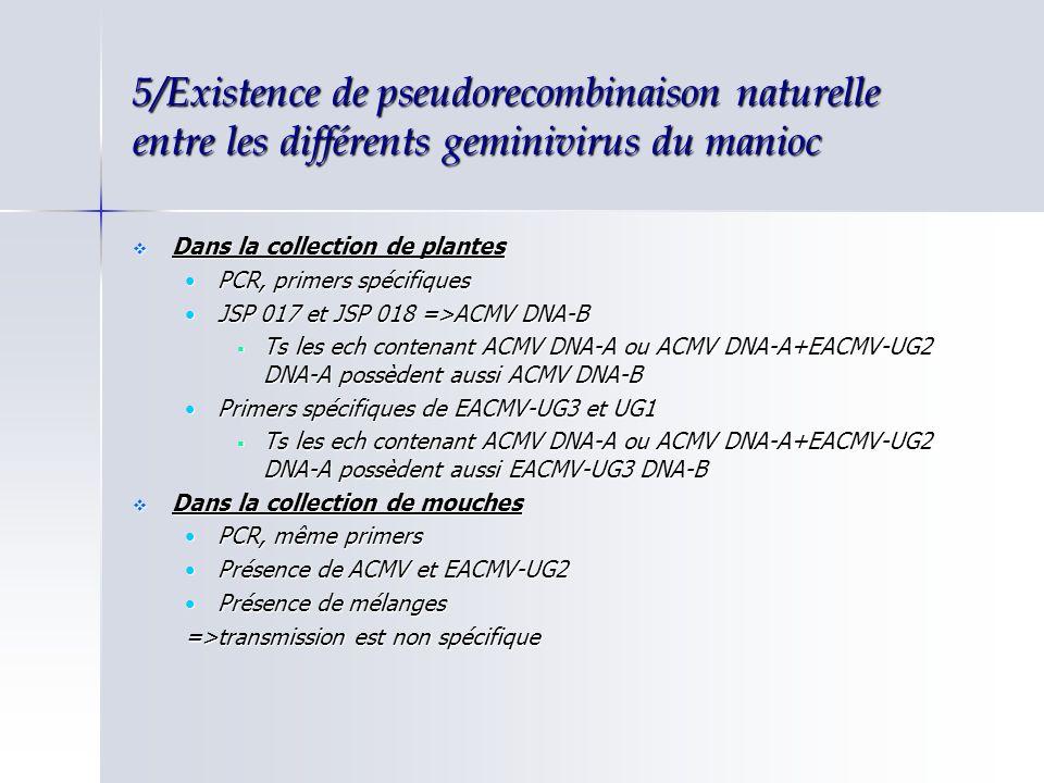 5/Existence de pseudorecombinaison naturelle entre les différents geminivirus du manioc