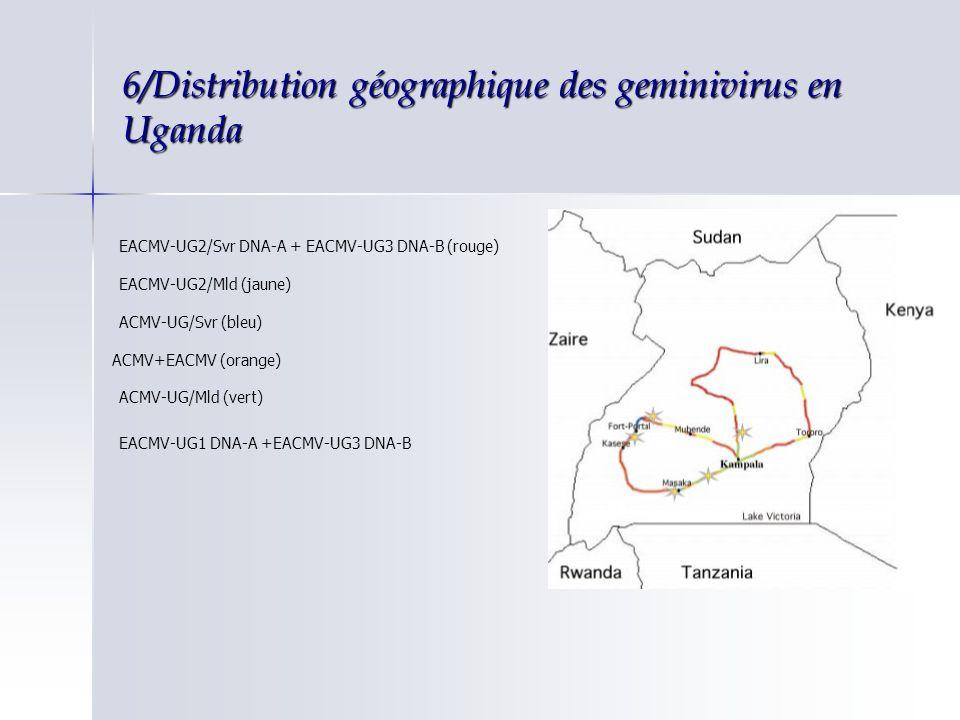 6/Distribution géographique des geminivirus en Uganda