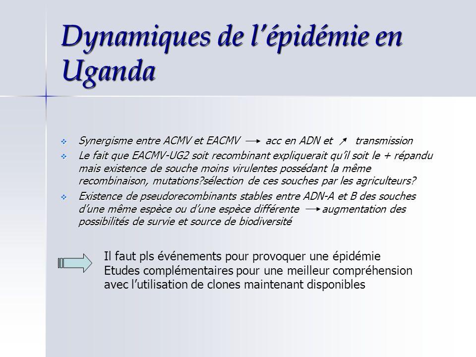 Dynamiques de l'épidémie en Uganda