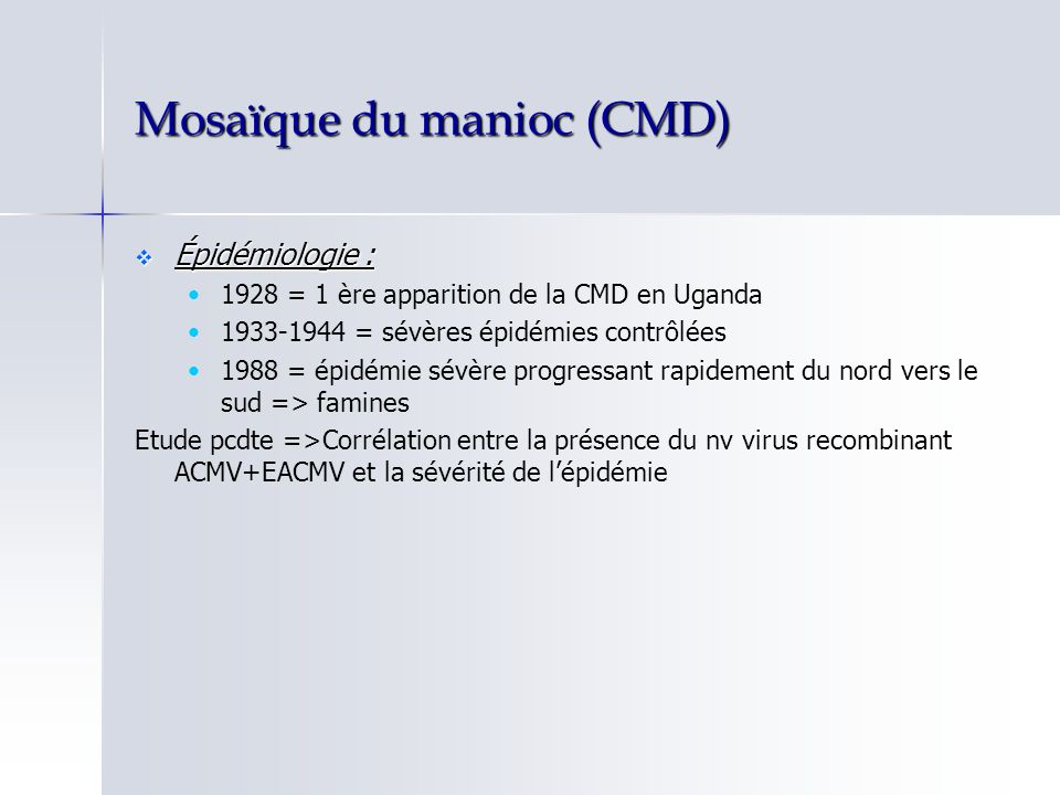 Mosaïque du manioc (CMD)