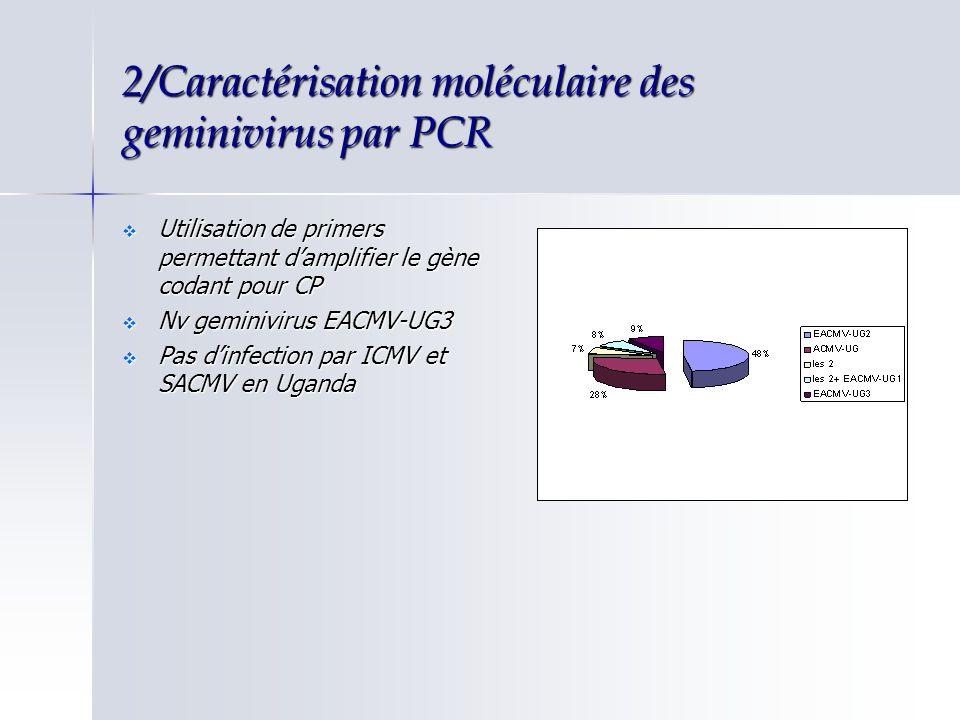 2/Caractérisation moléculaire des geminivirus par PCR
