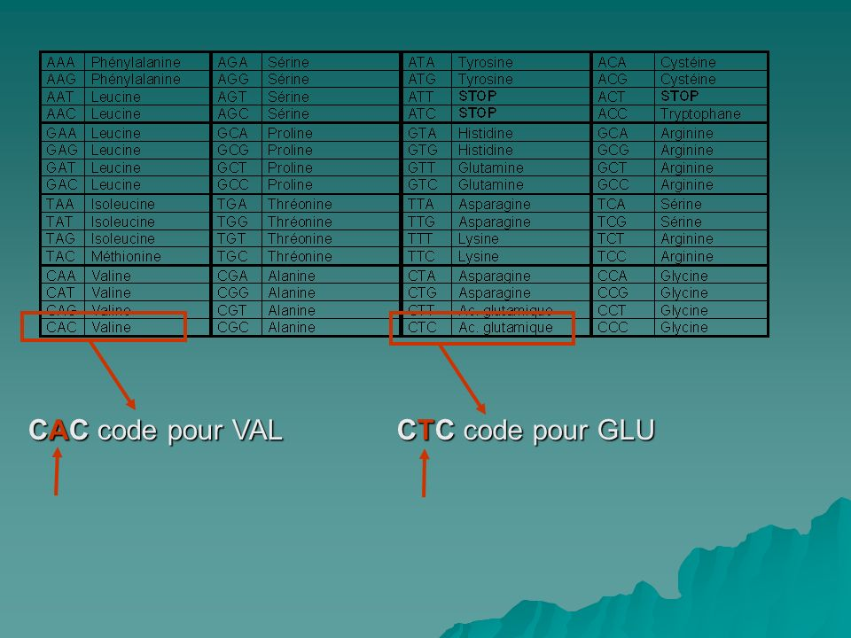 CAC code pour VAL CTC code pour GLU