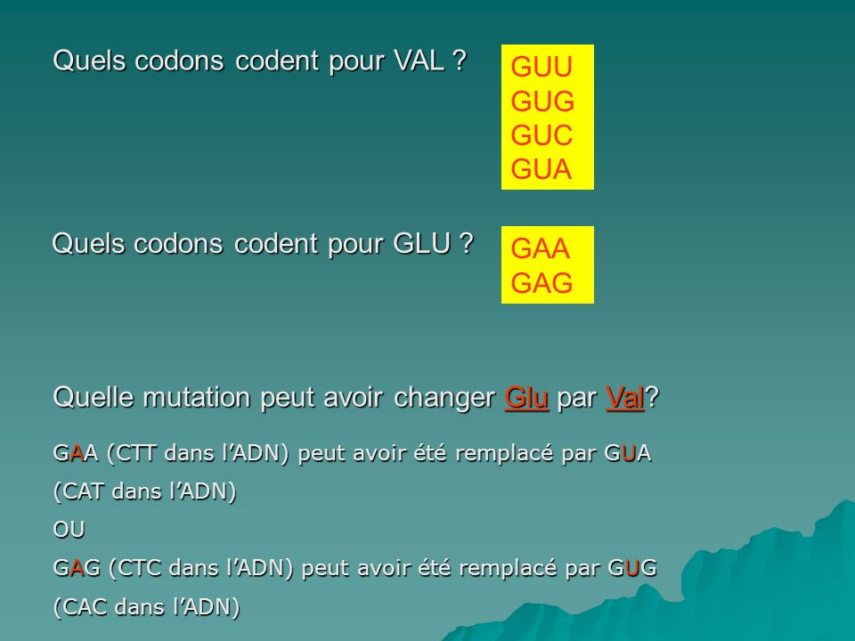 Quels codons codent pour VAL GUU GUG GUC GUA