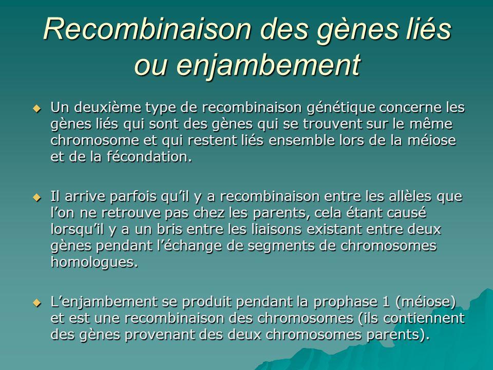 Recombinaison des gènes liés ou enjambement