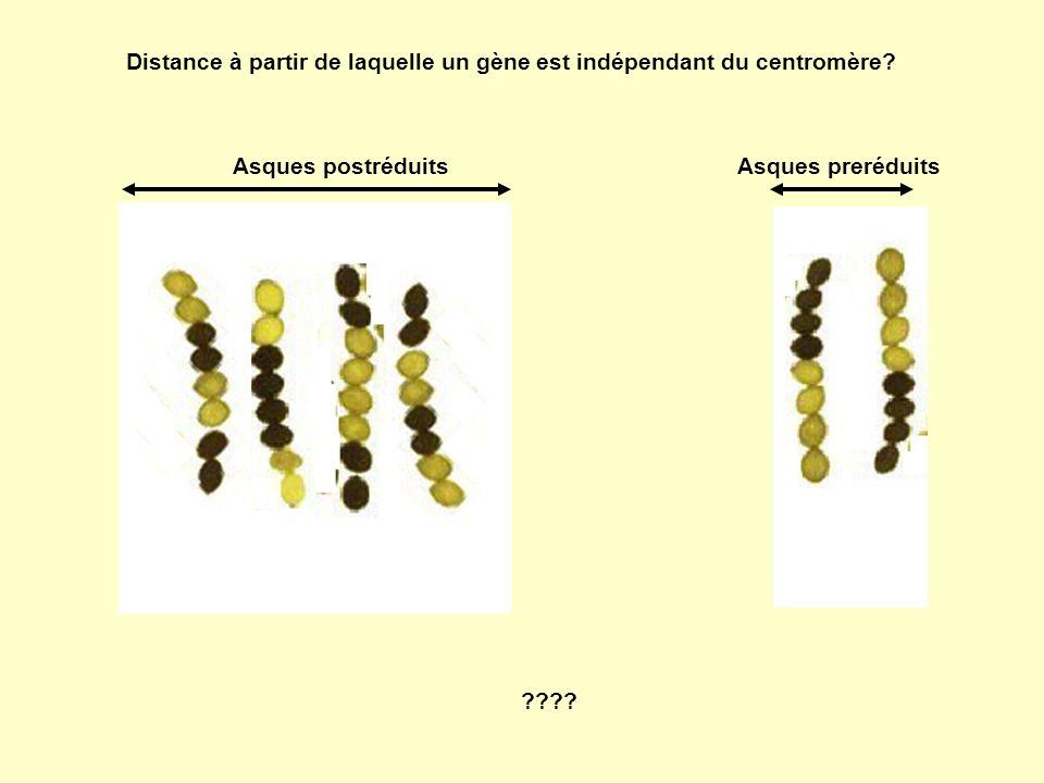 Distance à partir de laquelle un gène est indépendant du centromère