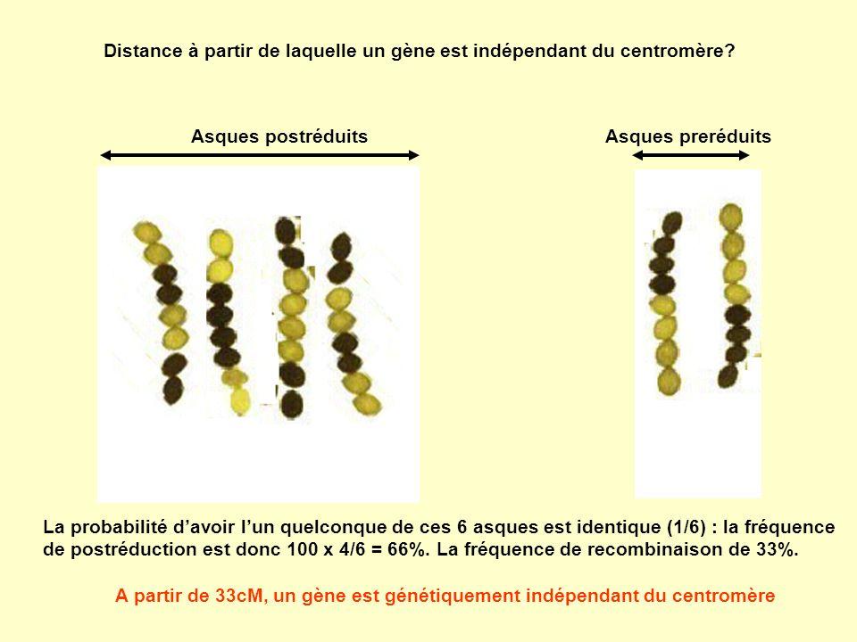 A partir de 33cM, un gène est génétiquement indépendant du centromère
