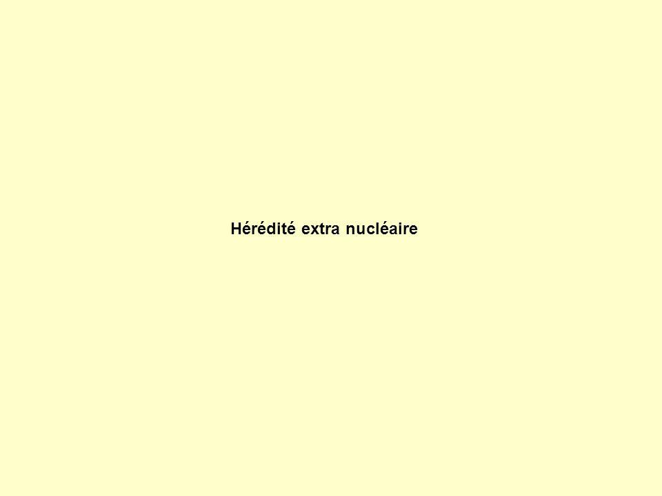 Hérédité extra nucléaire
