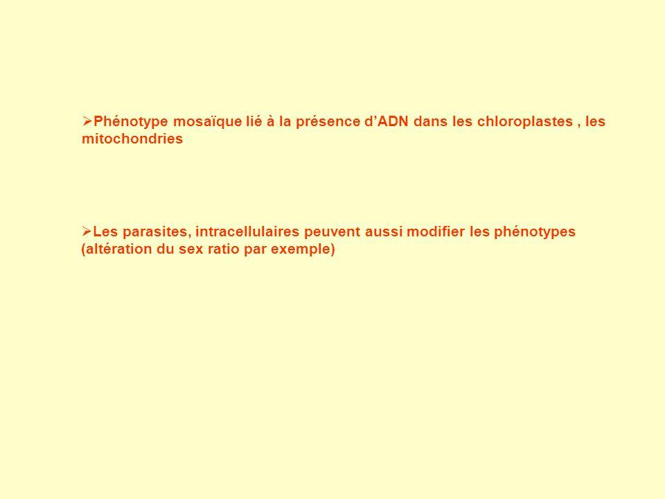 Phénotype mosaïque lié à la présence d'ADN dans les chloroplastes , les mitochondries
