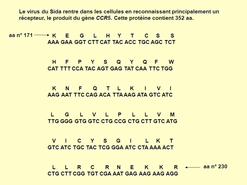 Le virus du Sida rentre dans les cellules en reconnaissant principalement un récepteur, le produit du gène CCR5. Cette protéine contient 352 aa.