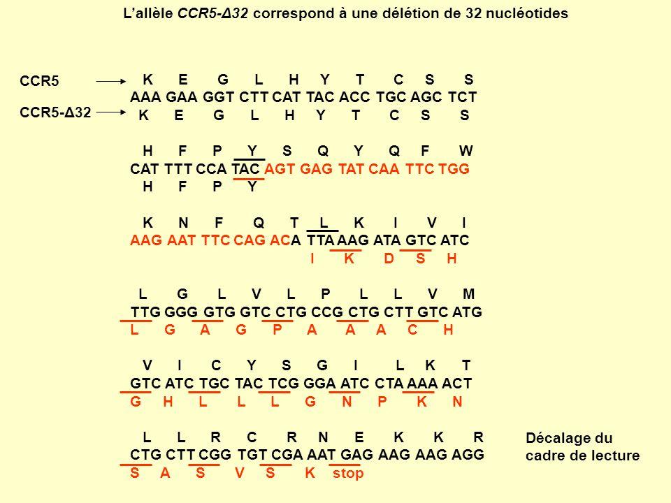 L'allèle CCR5-Δ32 correspond à une délétion de 32 nucléotides