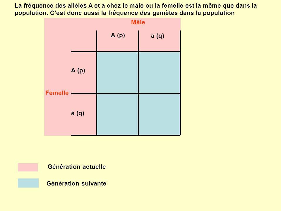 La fréquence des allèles A et a chez le mâle ou la femelle est la même que dans la population. C'est donc aussi la fréquence des gamètes dans la population