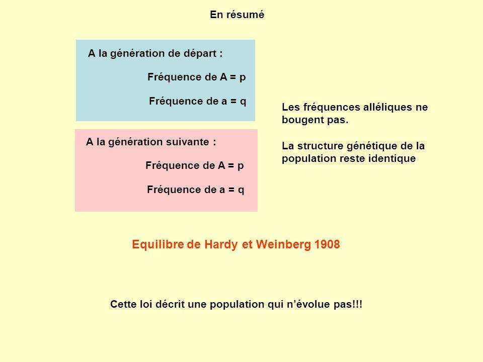 Equilibre de Hardy et Weinberg 1908