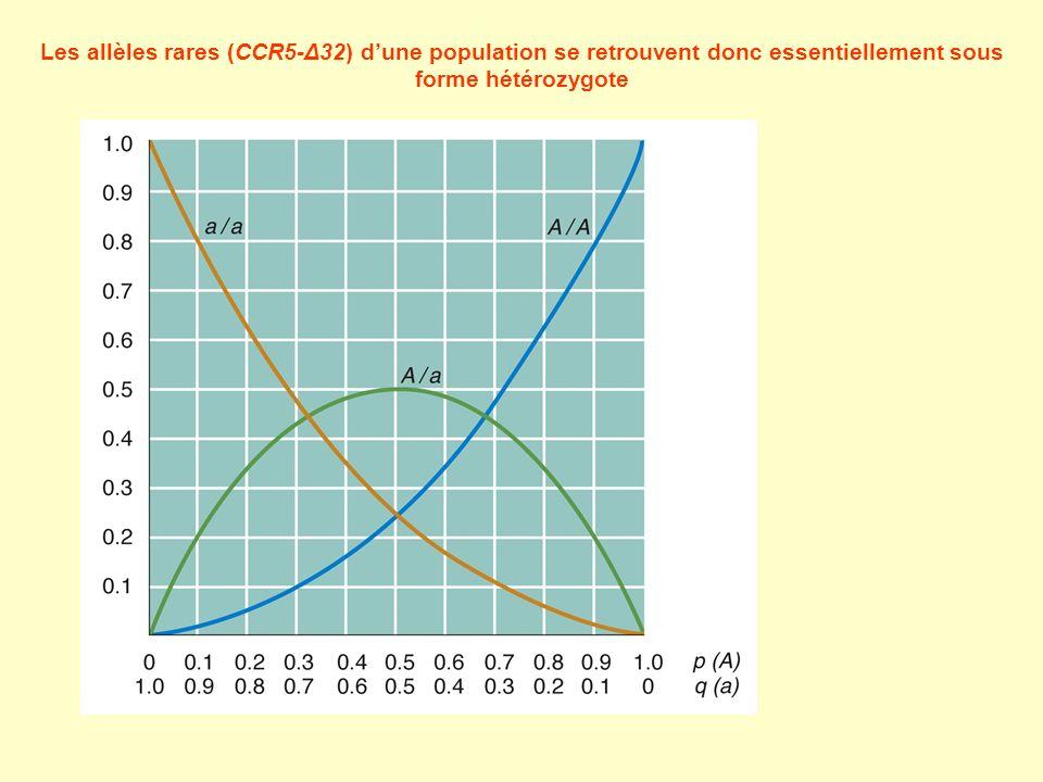 Les allèles rares (CCR5-Δ32) d'une population se retrouvent donc essentiellement sous forme hétérozygote