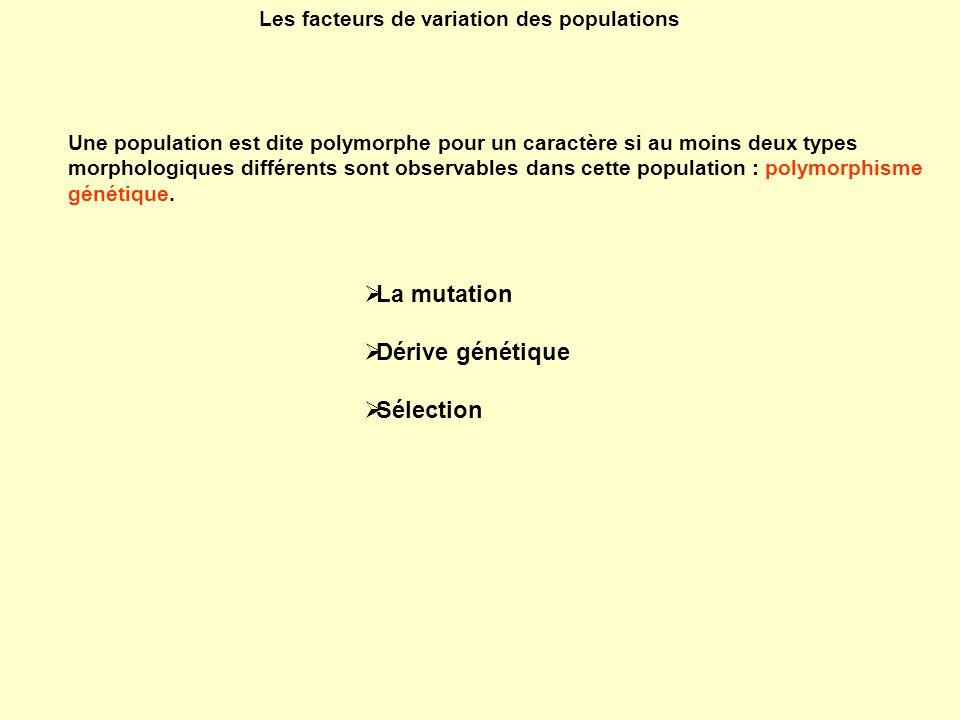 La mutation Dérive génétique Sélection