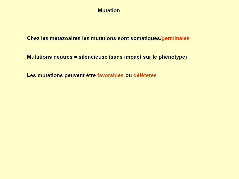 Mutation Chez les métazoaires les mutations sont somatiques/germinales. Mutations neutres = silencieuse (sans impact sur le phénotype)