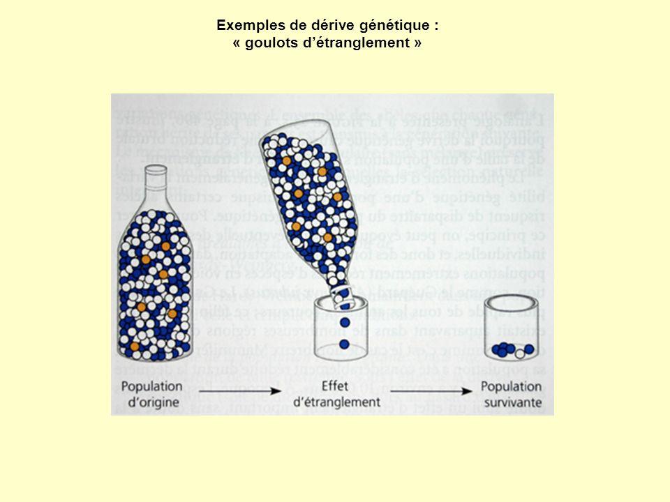 Exemples de dérive génétique : « goulots d'étranglement »