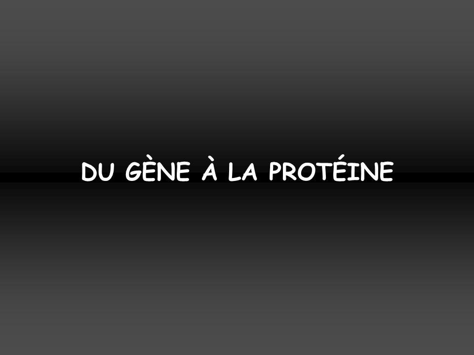 DU GÈNE À LA PROTÉINE