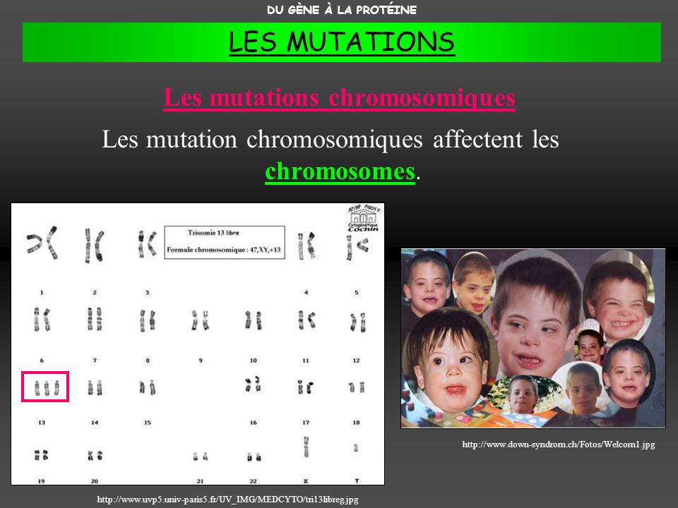 Les mutations chromosomiques