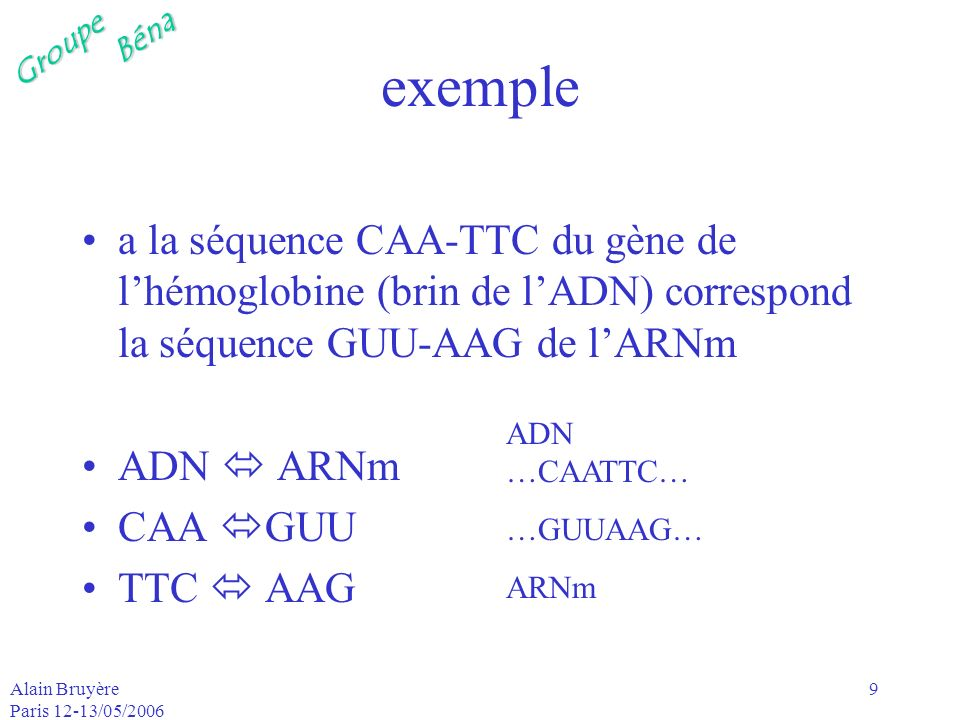 exemple a la séquence CAA-TTC du gène de l'hémoglobine (brin de l'ADN) correspond la séquence GUU-AAG de l'ARNm.