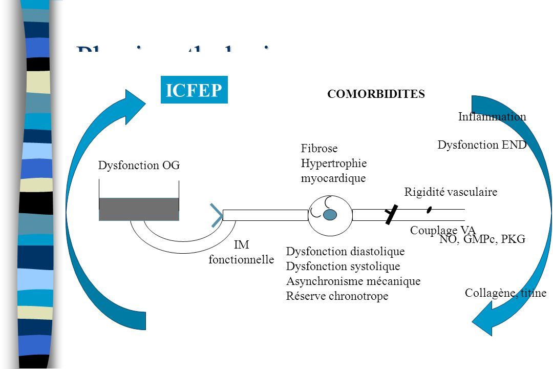 Physiopathologie ICFEP COMORBIDITES Inflammation Dysfonction END