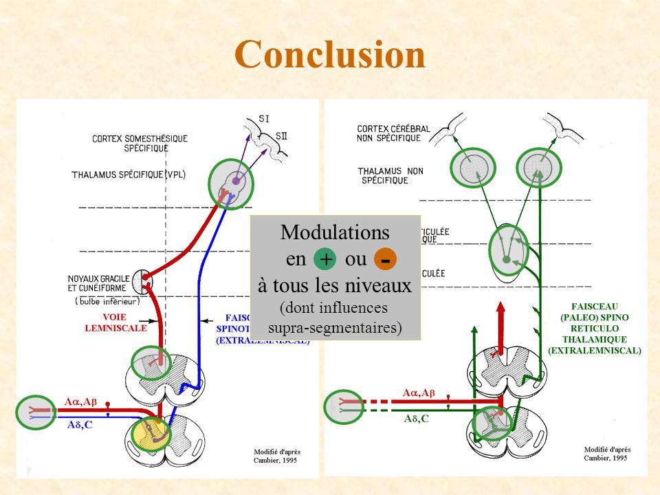 Conclusion - Modulations en ou à tous les niveaux + (dont influences