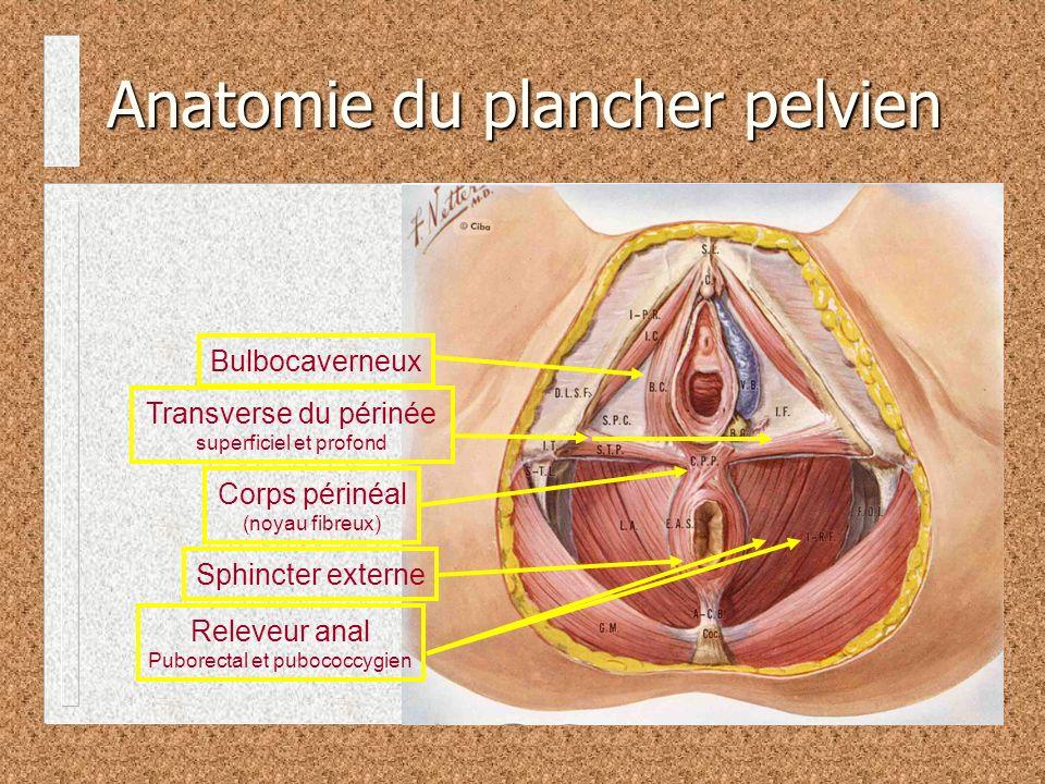 Anatomie du plancher pelvien