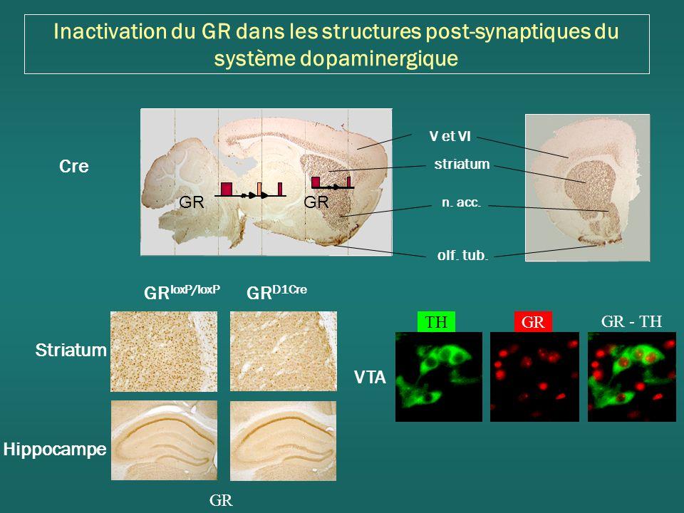 Inactivation du GR dans les structures post-synaptiques du système dopaminergique