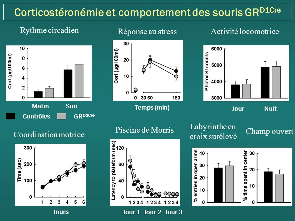 Corticostéronémie et comportement des souris GRD1Cre