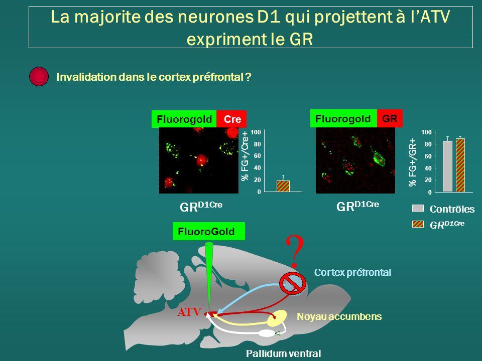 La majorite des neurones D1 qui projettent à l'ATV expriment le GR