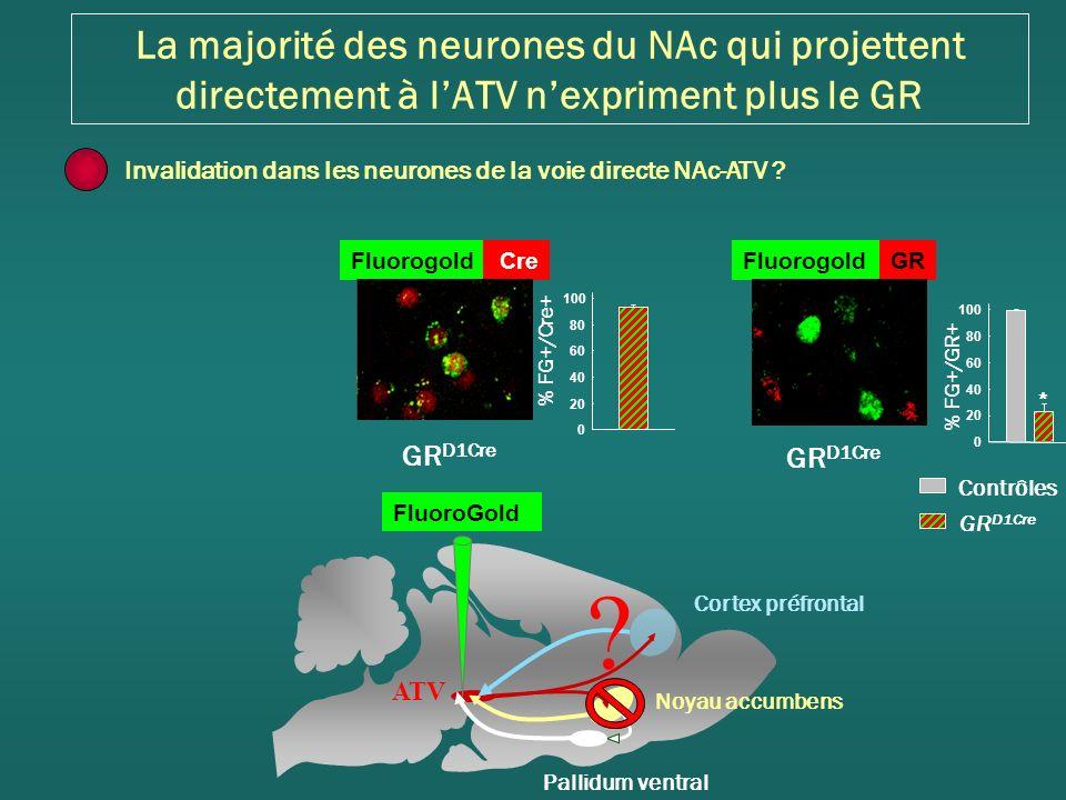 La majorité des neurones du NAc qui projettent directement à l'ATV n'expriment plus le GR