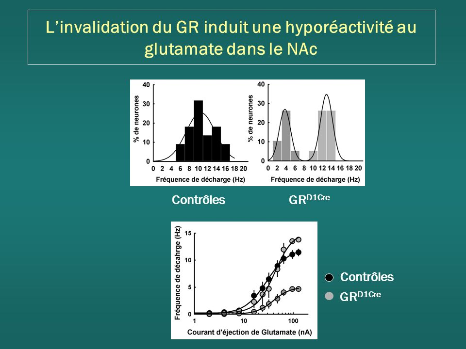 L'invalidation du GR induit une hyporéactivité au glutamate dans le NAc